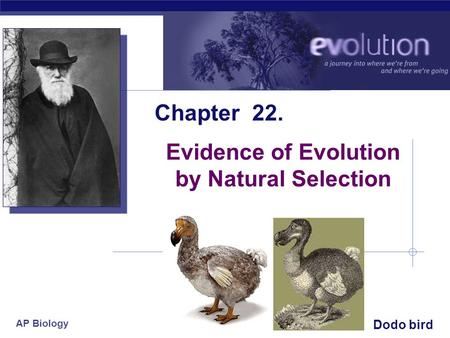 AP Biology 2005-2006 Chapter 22. Evidence of Evolution by Natural Selection Dodo bird.