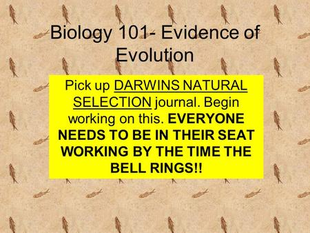 Biology 101- Evidence of Evolution Pick up DARWINS NATURAL SELECTION journal. Begin working on this. EVERYONE NEEDS TO BE IN THEIR SEAT WORKING BY THE.