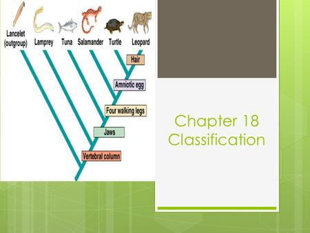 Chapter 18 Classification. 18.1 Finding Order in Diversity SC.912.L.15.4 and SC.912.N.1.1 Assigning Scientific Names Key Question: What are the goals.