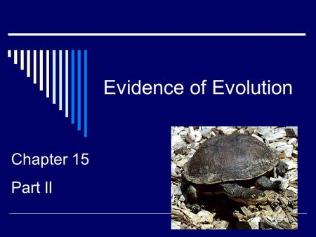 Evidence of Evolution Chapter 15 Part II. 1. Fossil Record  Are able to observe links between modern forms and ancestors (ex. transition species)  Relative.