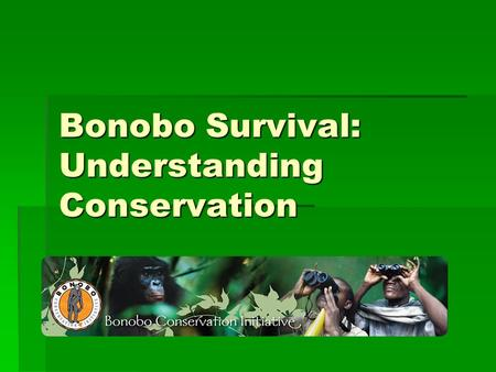 Bonobo Survival: Understanding Conservation. Bonobos are:  Great apes  Residents of the Democratic Republic of Congo  Very social beings  Matriarchal.