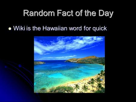 Random Fact of the Day Wiki is the Hawaiian word for quick Wiki is the Hawaiian word for quick.