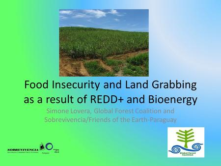Food Insecurity and Land Grabbing as a result of REDD+ and Bioenergy Simone Lovera, Global Forest Coalition and Sobrevivencia/Friends of the Earth-Paraguay.