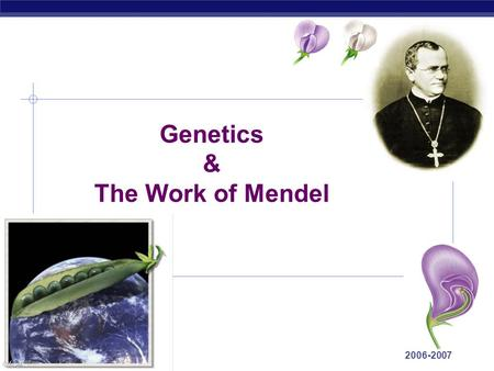 AP Biology 2006-2007 Genetics & The Work of Mendel.