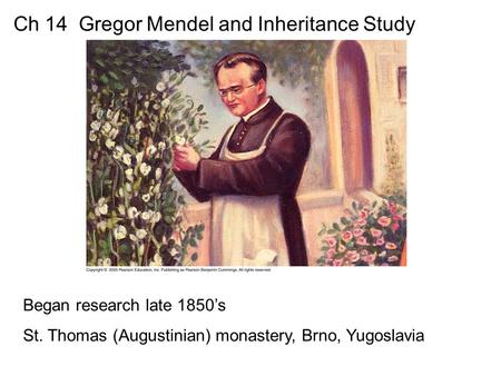 Ch 14 Gregor Mendel and Inheritance Study Began research late 1850's St. Thomas (Augustinian) monastery, Brno, Yugoslavia.