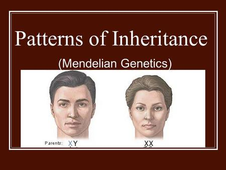 Patterns of Inheritance (Mendelian Genetics). Gregor Mendel 1890's Central European Monk Conducted research on pea plants Used garden peas Easy to grow.
