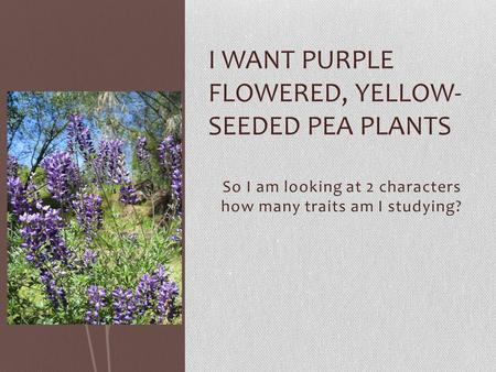 So I am looking at 2 characters how many traits am I studying? I WANT PURPLE FLOWERED, YELLOW- SEEDED PEA PLANTS.
