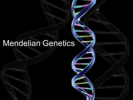 Mendelian Genetics. What is Heredity? The passing on of traits from one generation to the next X Female normal wing Male double wing P- generation F 1.
