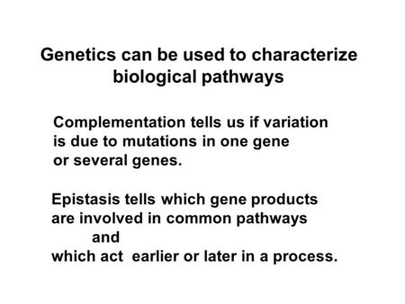 Genetics can be used to characterize biological pathways Epistasis tells which gene products are involved in common pathways and which act earlier or later.