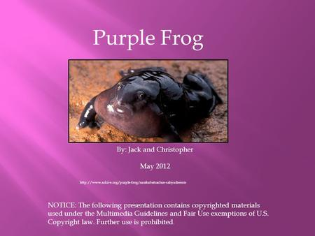 Purple Frog By: Jack and Christopher May 2012 NOTICE: The following presentation contains copyrighted materials used under the Multimedia Guidelines and.