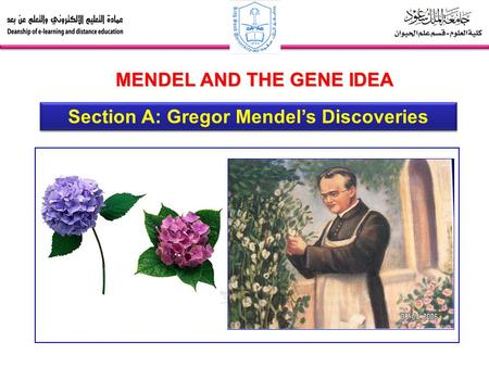 Section A: Gregor Mendel's Discoveries MENDEL AND THE GENE IDEA.