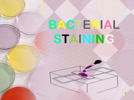 BACTERIALSTAININGBACTERIALSTAINING 1. What is a Stain A stain is a substance that adheres to a cell, giving the cell color. The presence of color gives.