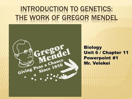 Biology Unit 6 / Chapter 11 Powerpoint #1 Mr. Velekei.