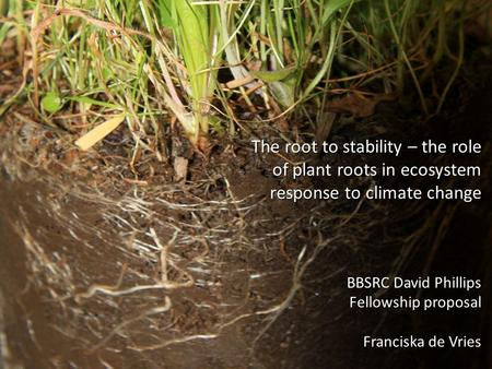 The root to stability – the role of plant roots in ecosystem response to climate change BBSRC David Phillips Fellowship proposal Franciska de Vries.