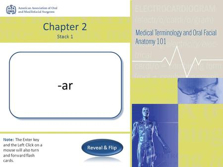 Chapter 2 Stack 1 Pertaining to -ar Note: The Enter key and the Left Click on a mouse will also turn and forward flash cards.