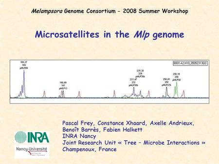 Microsatellites in the Mlp genome Pascal Frey, Constance Xhaard, Axelle Andrieux, Benoît Barrès, Fabien Halkett INRA Nancy Joint Research Unit « Tree –