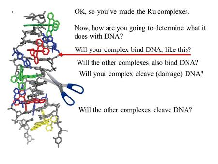 OK, so you've made the Ru complexes. Now, how are you going to determine what it does with DNA? Will your complex bind DNA, like this? Will the other complexes.