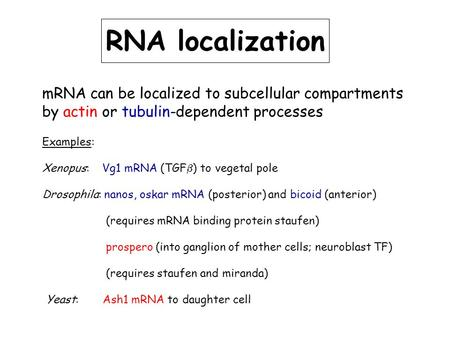 RNA localization mRNA can be localized to subcellular compartments by actin or tubulin-dependent processes Examples: Xenopus: Vg1 mRNA (TGF  ) to vegetal.