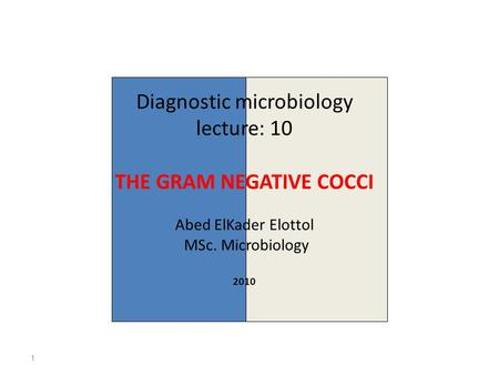 Diagnostic microbiology lecture: 10 THE GRAM NEGATIVE COCCI Abed ElKader Elottol MSc. Microbiology 2010 1.