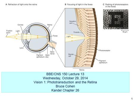 BBE/CNS 150 Lecture 13 Wednesday, October 29, 2014 Vision 1: Phototransduction and the Retina Bruce Cohen Kandel Chapter 26 1.
