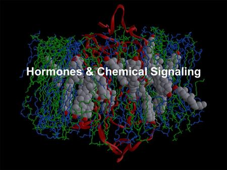Hormones & Chemical Signaling. Lecture Outline Communication Basics –Communication Overview –Communication Methods –Signal pathways Types Regulation (modulation)