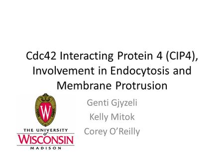 Cdc42 Interacting Protein 4 (CIP4), Involvement in Endocytosis and Membrane Protrusion Genti Gjyzeli Kelly Mitok Corey O'Reilly.