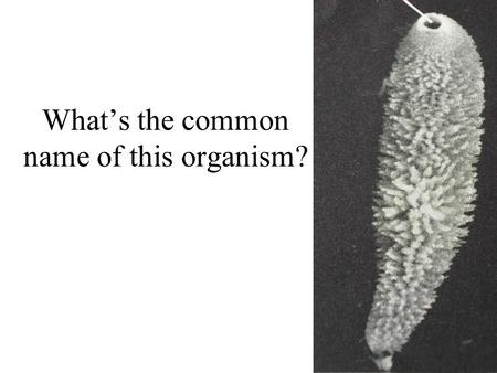 What's the common name of this organism?