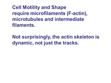 Cell Motility and Shape require microfilaments (F-actin), microtubules and intermediate filaments. Not surprisingly, the actin skeleton is dynamic, not.
