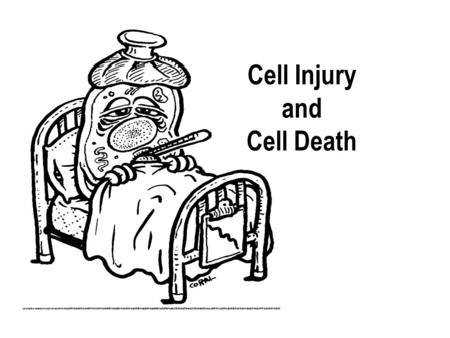 Cell Injury and Cell Death. Cell Injury If the cells fail to adapt under stress, they undergo certain changes called cell injury. The affected cells may.