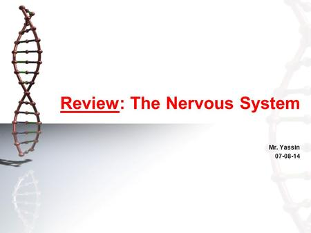 Review: The Nervous System Mr. Yassin 07-08-14. Lesson Intention: Introduction The nervous system: –Structural component –Physiological functions Reflex.