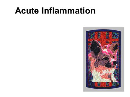 Acute Inflammation http://www.som.tulane.edu/classware/pathology/medical_pathology/inflammation/ http://www.som.tulane.edu/classware/pathology/medical_pathology/repair/