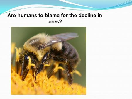 Are humans to blame for the decline in bees?