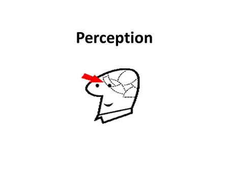Perception. Perception; is a complex cognitive process that is concerned with selection, organization and interpretation of stimuli. Perception involves.