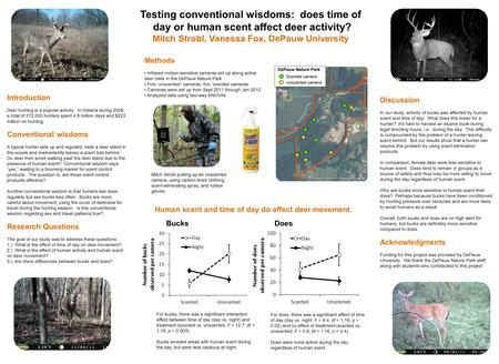 Testing conventional wisdoms: does time of day or human scent affect deer activity? Mitch Strobl, Vanessa Fox, DePauw University Introduction Deer hunting.