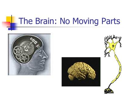 The Brain: No Moving Parts. Neurons Neurons are similar to other cells in the body in some ways such as: 1. Neurons are surrounded by a cell membrane.