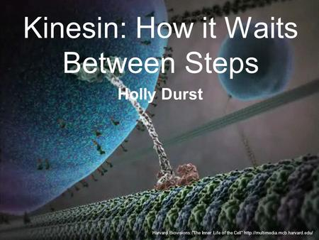 "Kinesin: How it Waits Between Steps Harvard Biovisions: ""The Inner Life of the Cell""  Holly Durst."