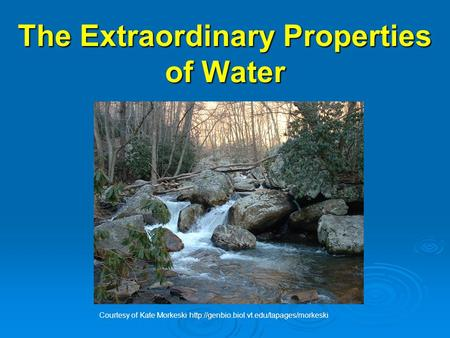 The Extraordinary Properties of Water Courtesy of Kate Morkeski