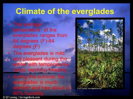 The average temperature of the everglades ranges from 64 degrees (F)-84 degrees (F) The everglades is mild and pleasant during the winter with temperatures.