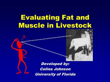 Evaluating Fat and Muscle in Livestock Developed by: Celina Johnson University of Florida.