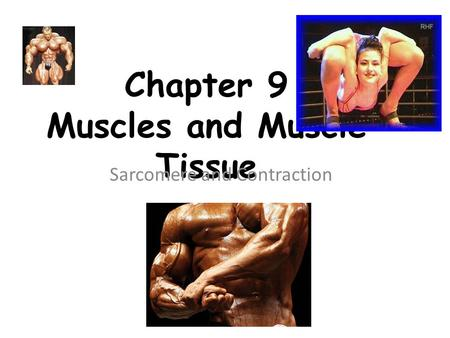 Chapter 9 Muscles and Muscle Tissue Sarcomere and Contraction.