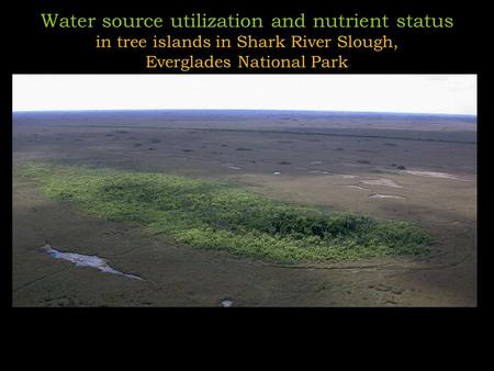Water source utilization and nutrient status in tree islands in Shark River Slough, Everglades National Park.