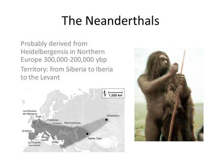 The Neanderthals Probably derived from Heidelbergensis in Northern Europe 300,000-200,000 ybp Territory: from Siberia to Iberia to the Levant.
