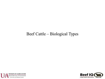 Beef Cattle – Biological Types. Biological Type ● Bos taurus vs Bos indicus ● Temperate vs Tropically Adapted ● Early vs Late Maturing ● High vs Low Maintenance.