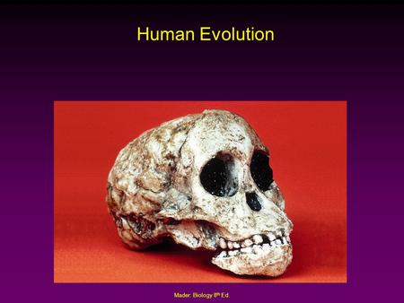 Mader: Biology 8 th Ed. Human Evolution. Mader: Biology 8 th Ed. Classification of Modern Humans Kingdom: Animalia Phylum: Chordata Class: Mammalia Order: