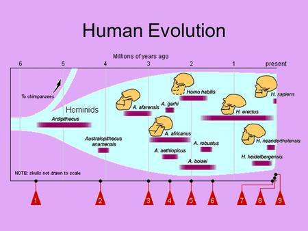 Human Evolution. Adaptations Adaptation: Any variation that makes an organism better suited to its environment.