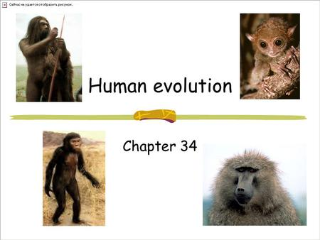 Human evolution Chapter 34. Humans??? Archonta 65 mya Small arboreal (tree-dwelling) mammals Large eyes Insect eating Nocturnal Gave rise to bats,