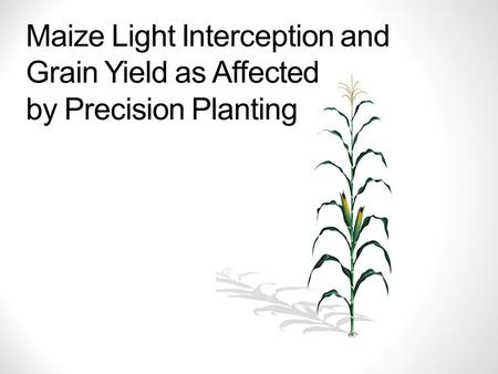 Maize Light Interception and Grain Yield as Affected by Precision Planting.