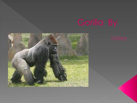  Gorillas live in eastern Zaire  Biome- some live in rainforests, others live in dry forests  Type of home-nest in a tree  Do they make its home-