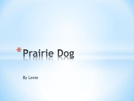 By Lexie. * The Prairie Dog is a small thing. It can be 12-15 inches long with a 2-3 inch tail. * It weighs 1-3 lbs. * It always has a black tail and.