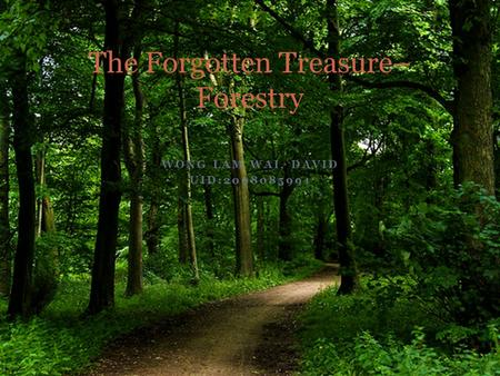 WONG LAM WAI, DAVID UID:2008085991 The Forgotten Treasure– Forestry.